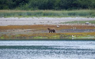Bear on shore 2
